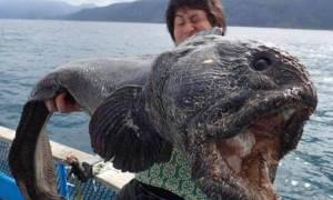 Έπιασαν ψάρι-τέρας στην Ιαπωνία - Μεταλλαγμένο λόγω της Φουκοσίμα; (photos)