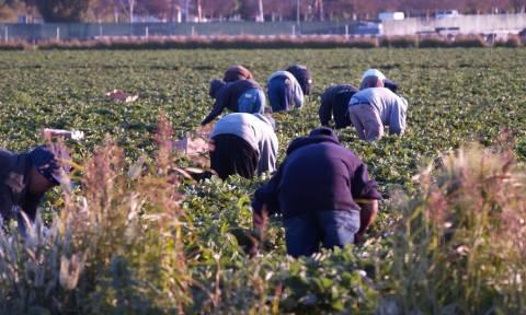 ΥΠΟΙΚ: 9 στους 10 αγρότες δήλωσαν εισόδημα έως 5.000 ευρώ το 2014
