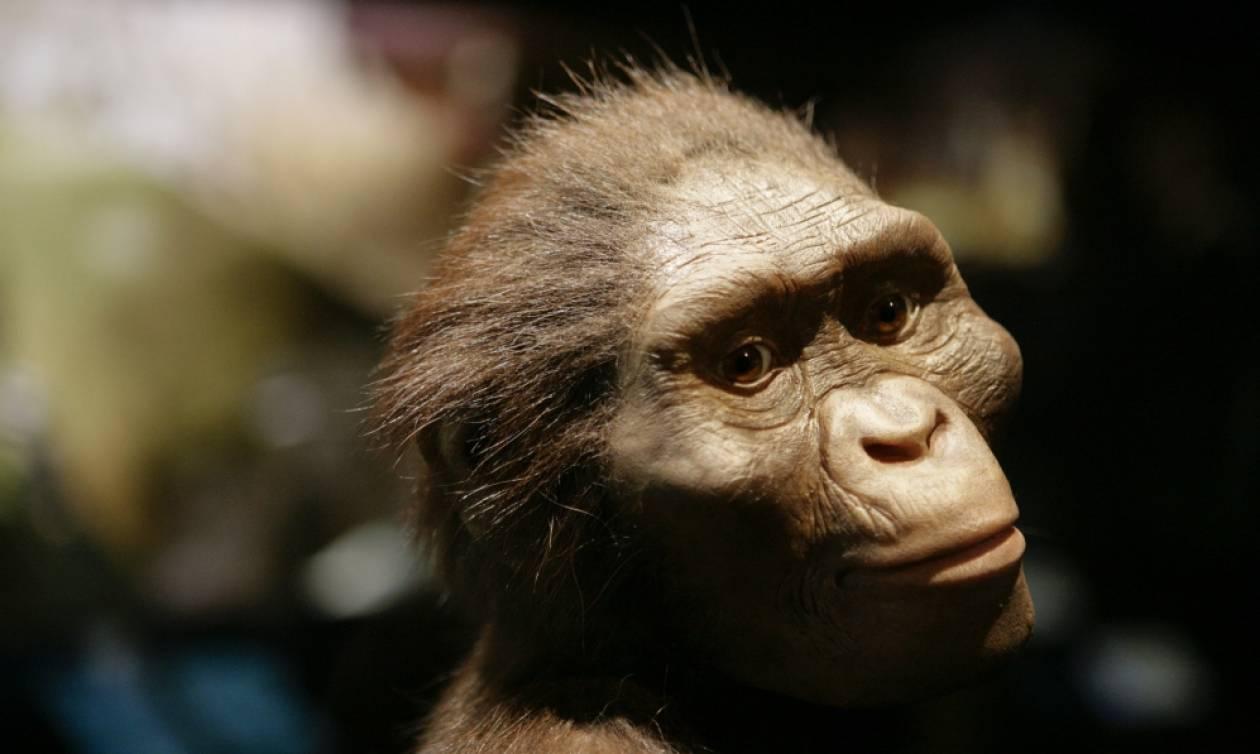 Αυστραλοπίθηκος Λούσι: Η Google τιμάει με doodle τα 41 χρόνια από την ανακάλυψή της (vid)
