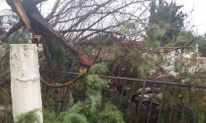 Ανεμοστρόβιλος σάρωσε την Ξάνθη σηκώνοντας σκεπές και ξεριζώνοντας δέντρα (photos)