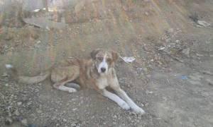 Έκαιγε υποσιτισμένα σκυλιά με καυστικό οξύ και τα έθαβε σε χωράφι