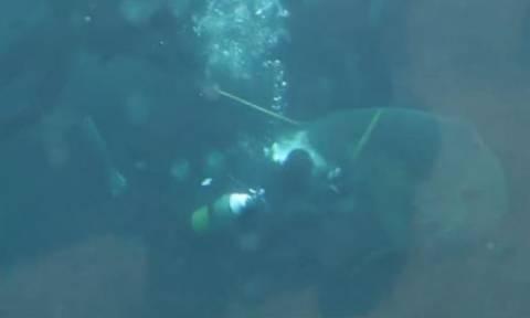 Βίντεο – σοκ: Καρχαρίας επιτίθεται σε δύτη ενυδρείου!