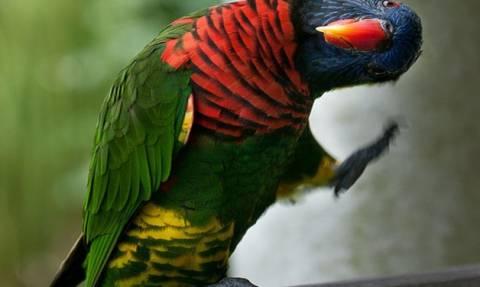 Ξεκαρδιστικό ανέκδοτο: H… παπαγαλίνα έκανε πονηρές… σκέψεις