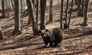 Μύρισε Άνοιξη - Ξύπνησαν οι αρκούδες στο Καταφύγιο του Αρκτούρου