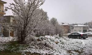 25η Μαρτίου: Το «έστρωσε» στη Σιάτιστα (pics)