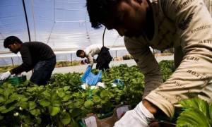 Τροπολογία - αίσχος: Ο ΣΥΡΙΖΑ νομιμοποιεί ΟΛΟΥΣ τους παράνομους μετανάστες ως «εργάτες γης»!