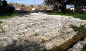Έβρος: Τεράστιες ζημιές στις καλλιέργειες από την αιφνιδιαστική χαλαζόπτωση