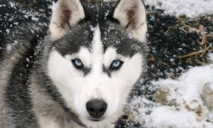 Κοζάνη: Νέο περιστατικό επίθεσης σκύλου σε παιδί