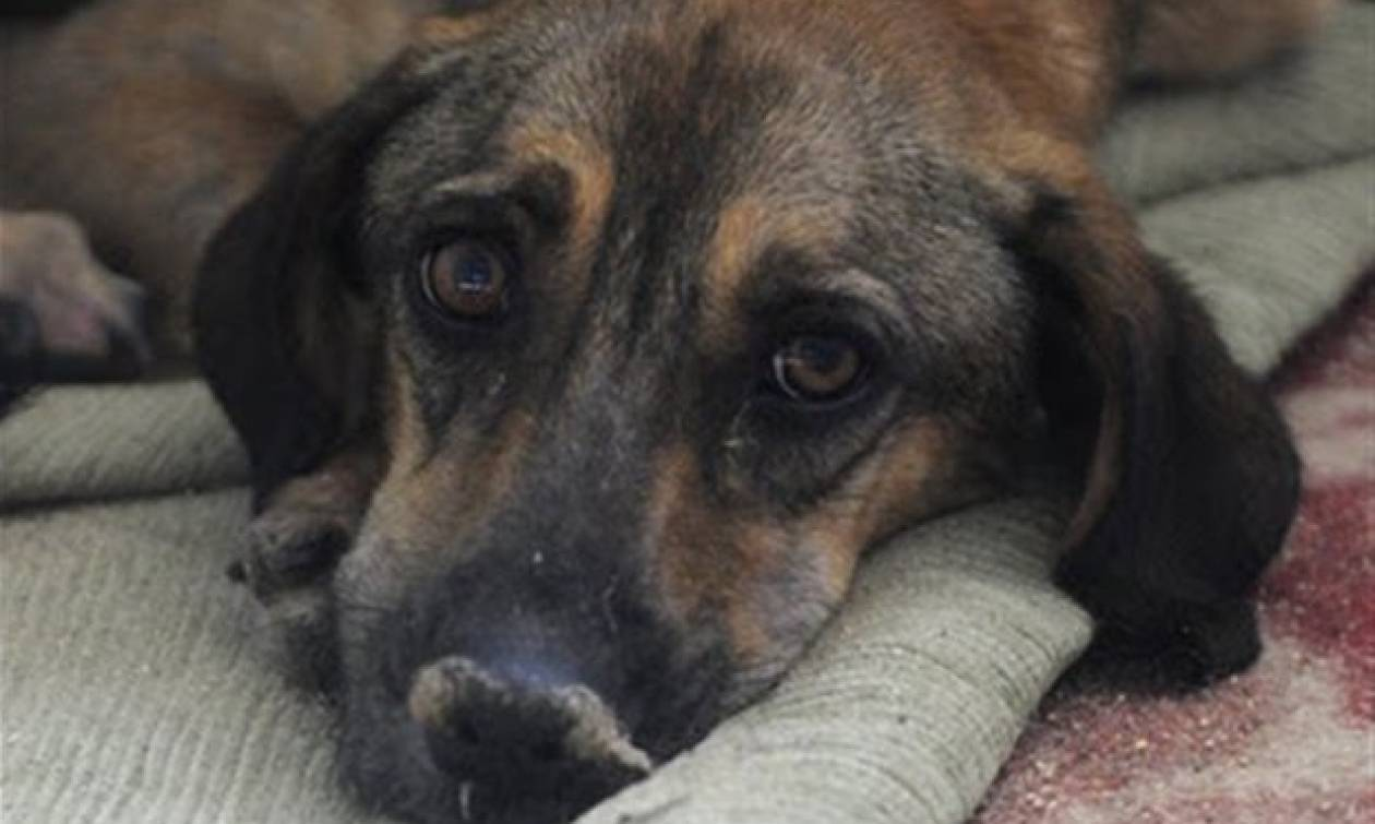 Πρόστιμα 30.000€ για θανατώσεις ζώων στη Λαμία (vid)