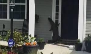 Η πιο τρομακτική επίσκεψη: Δεν φαντάζεστε τι τους χτύπησε το κουδούνι! (video)