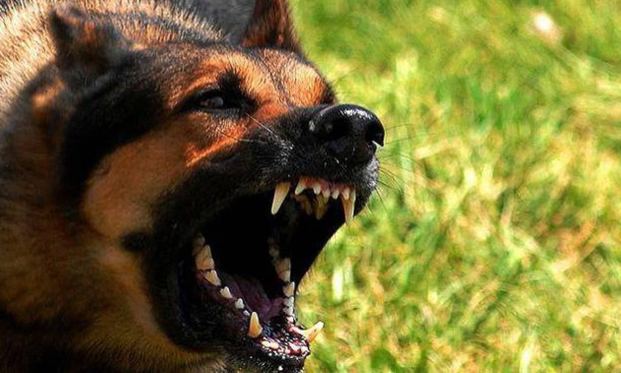Λάρισα: Σκυλιά επιτέθηκαν σε αγρότες (pic)