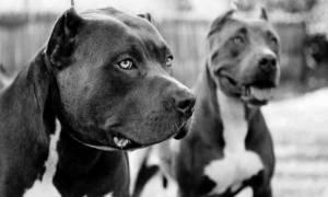Νέο περιστατικό επίθεσης σκύλου στην Πάτρα - Συνελήφθη η ιδιοκτήτρια