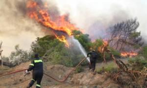 ΕΛΓΑ: Ξεκίνησαν οι αιτήσεις για το πρόγραμμα «Πυρκαγιές 2013»