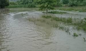Πρέβεζα: Ο ποταμός Αχέροντας «κατάπιε» χωράφια στο Σταυροχώρι (pics - video)