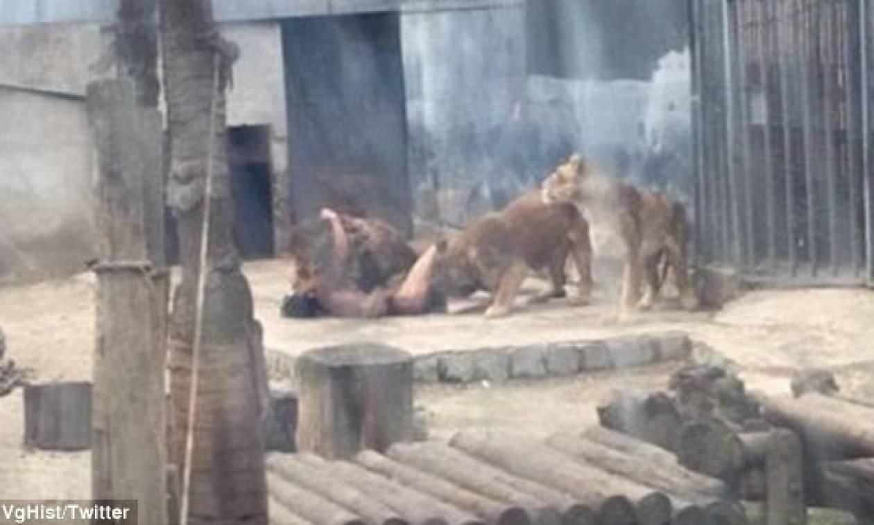 Βίντεο - σοκ: Πήδηξε γυμνός σε κλουβί με λιοντάρια για να τον… φάνε ζωντανό!