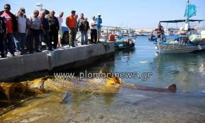 Μυτιλήνη: Ψαράδες αλίευσαν καρχαρία 7 μέτρων! (pics)