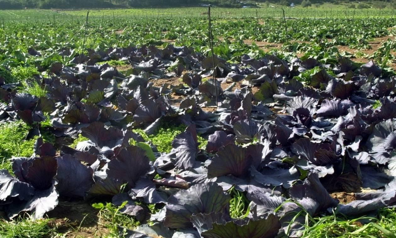 ΕΛΓΑ: Σήμερα (27/5) η πληρωμή των αποζημιώσεων σε αγρότες