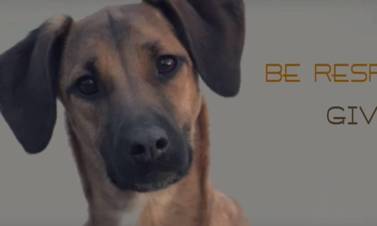Αυτό το βίντεο ΠΡΕΠΕΙ να το δουν όσοι έχουν σκύλο!