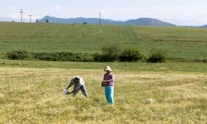 Το «έκτρωμα» Κατρούγκαλου γονατίζει και τους αγρότες παρά τις υποσχέσεις του
