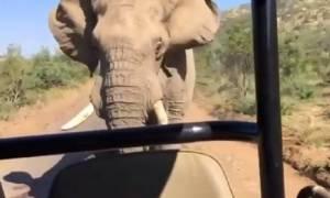 Μόνο… ελέφαντας θα μπορούσε να επιτεθεί στον Άρνολντ Σβαρτσενέγκερ! (video)