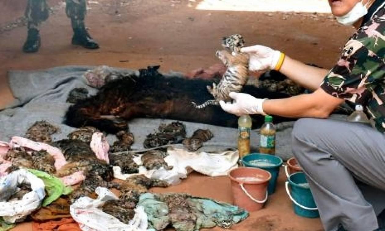 Φρικιαστικό εύρημα στον περίφημο βουδιστικό «ναό των τίγρεων» στην Ταϋλάνδη (videos+photos)