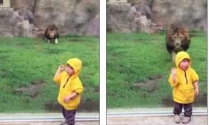 Ιαπωνία: Η σοκαριστική στιγμή που ένα λιοντάρι ορμάει σε αγοράκι (vid)