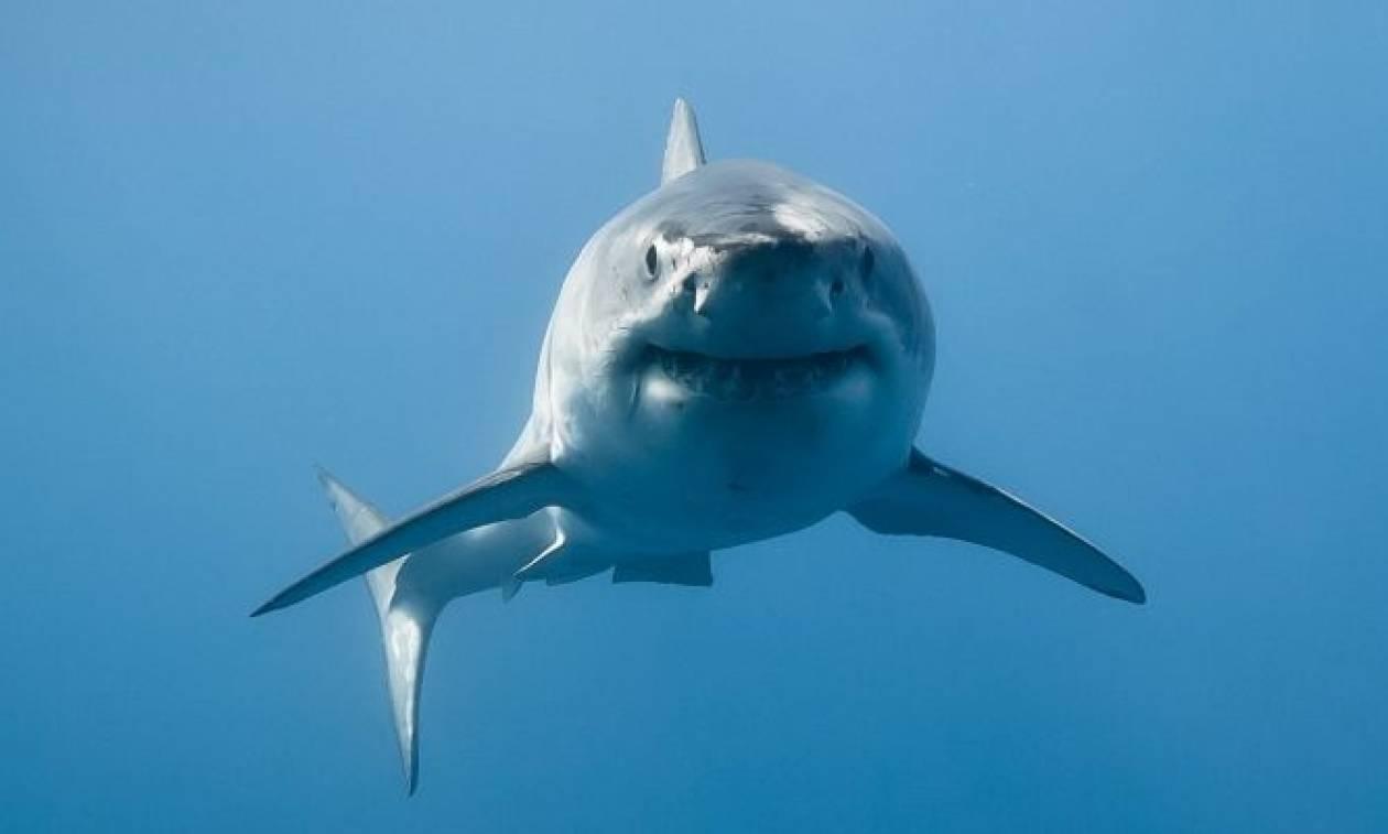 Αυστραλία: Νέος θάνατος από επίθεση καρχαρία πέντε μέτρων (Vid)