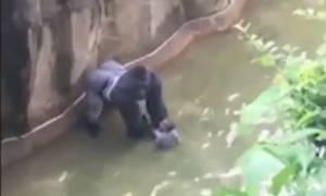 ΗΠΑ: Καμία δίωξη σε βάρος της μητέρας του παιδιού που έπεσε στο κλουβί γορίλα