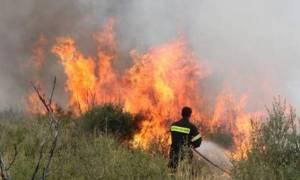 Συναγερμός στην Ηλεία: Μεγάλη πυρκαγιά στην Δαφνούλα