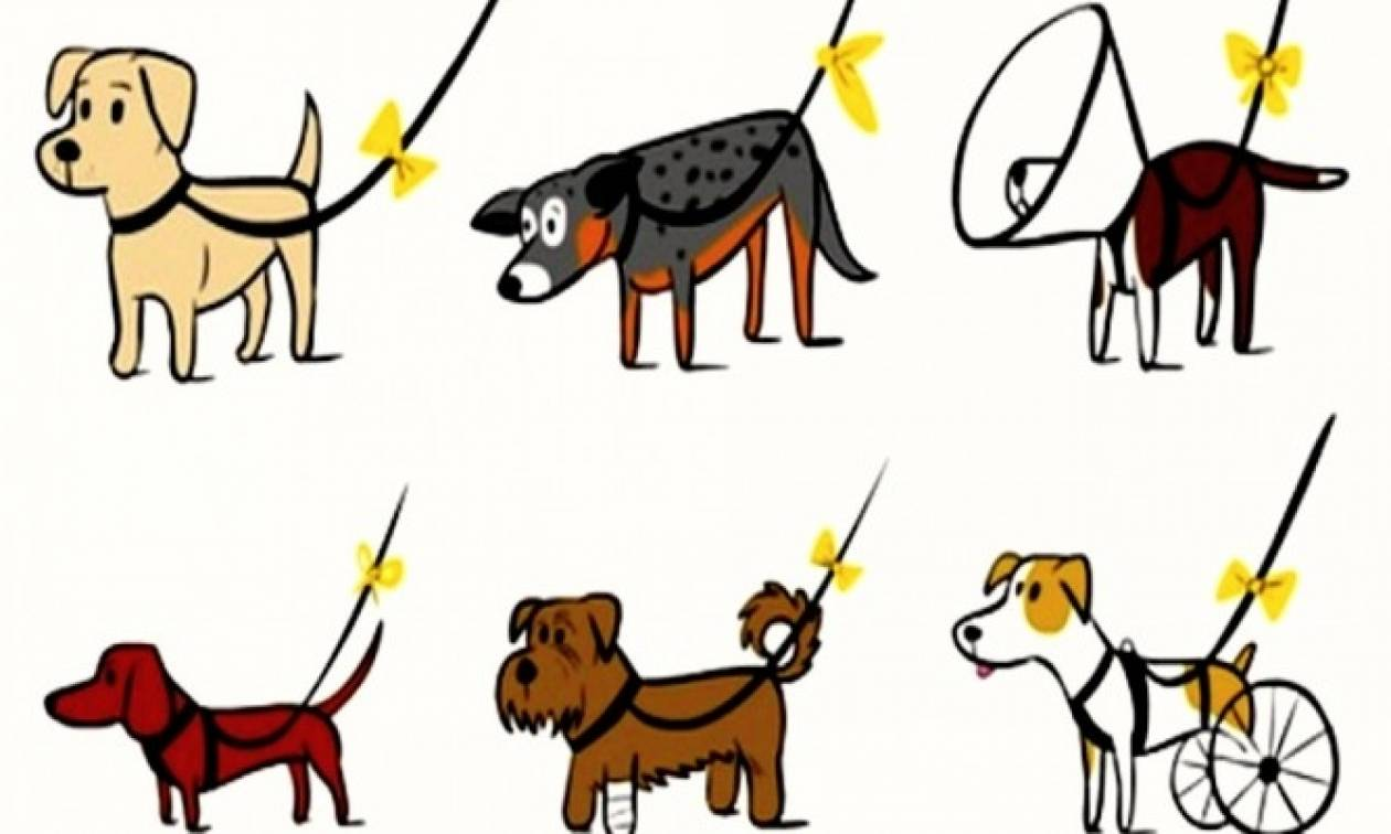 Yellow Pet Project: Το νέο παγκόσμιο κίνημα για σκύλους έρχεται στην Ελλάδα