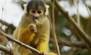 Μαϊμού παραπάτησε και προκάλεσε μπλακ άουτ σε μια ολόκληρη χώρα