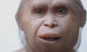 Παλαιοανθρωπολογία: Ανακαλύφθηκαν οι πρόγονοι των «Χόμπιτ» (Vid)