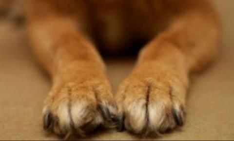 Μαγνησία: Συνελήφθη 69χρονος που έσερνε σκύλο με φορτηγό