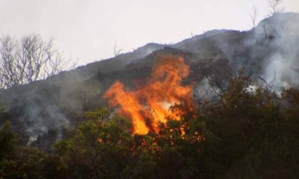 Σάνη Χαλκιδικής: Στάχτη έγιναν 25 στρέμματα χορτολιβαδικής έκτασης