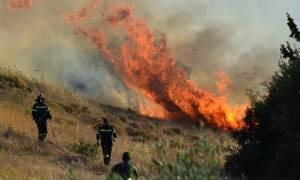 ΤΩΡΑ: Μεγάλη φωτιά σε εξέλιξη στα Μέγαρα