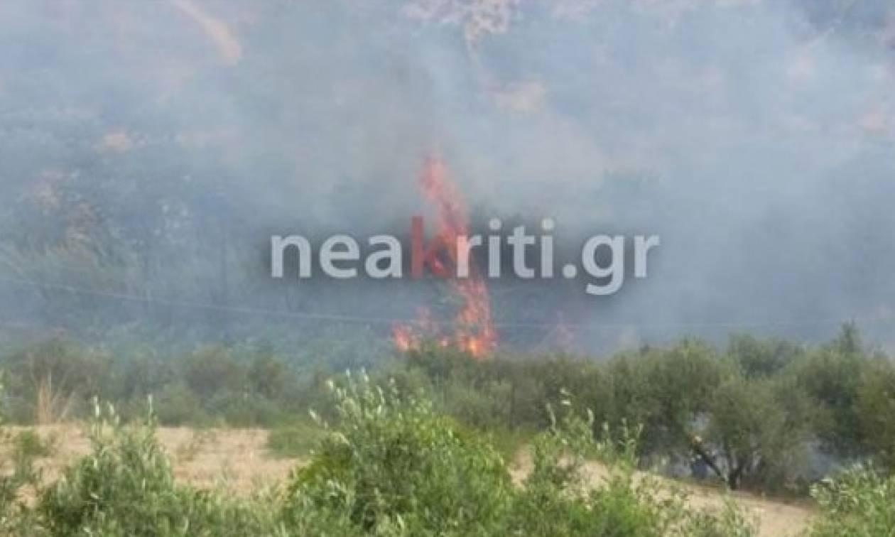 Πυρκαγιά σε εξέλιξη στην Κνωσό - Απειλούνται σπίτια (pics&vid)