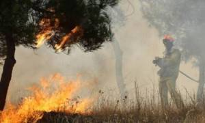 Μέγαρα: Συνελήφθη 52χρονος ως υπαίτιος πυρκαγιάς