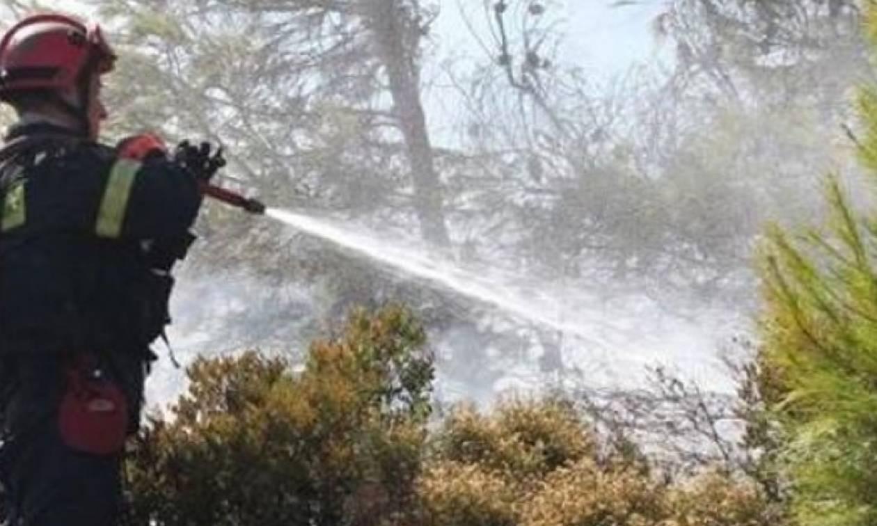 Ηράκλειο: Υπό έλεγχο η πυρκαγιά στις Ποταμιές