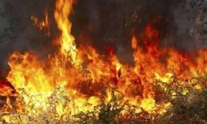 Σε πύρινο κλοιό η Αττική - Μεγάλες φωτιές σε Νέα Πέραμο και Μέγαρα