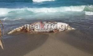 Ηράκλειο: «Πάγωσαν» οι κάτοικοι με αυτό που ξέβρασε η θάλασσα (photos+videos)