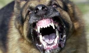 Κομοτηνή: Σκυλιά κατασπάραξαν 50χρονο που πήγε να φτιάξει την κεραία της τηλεόρασης (photos)