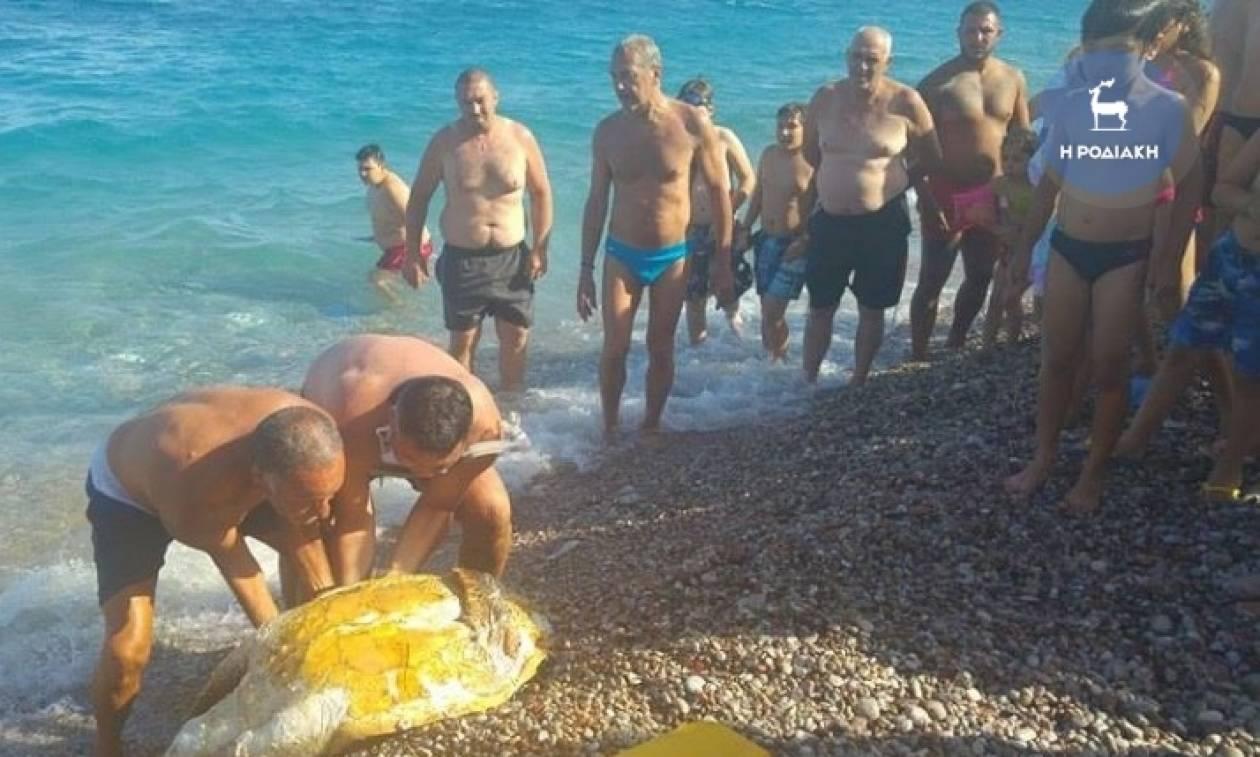 Σοκαρίστηκαν οι λουόμενοι σε παραλία της Ρόδου - Τι συνέβη; (pics)