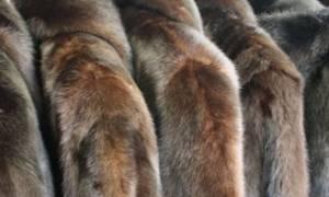 Θεσσαλονίκη – Απίστευτο: Δεν φαντάζεστε τι έκανε για να αγοράσει… 19 γούνες