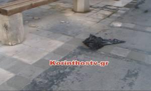 Νέο σοκ στην Κόρινθο – Άγριο έγκλημα στο κέντρο της πόλης (video)