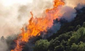 Μεγάλη φωτιά στην περιοχή «Δοκός» στη Χαλκίδα
