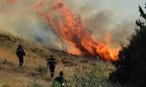 Συναγερμός στην Πυροσβεστική για πυρκαγιές σε Δοκό Ευβοίας και Πρόδρομο Θηβών