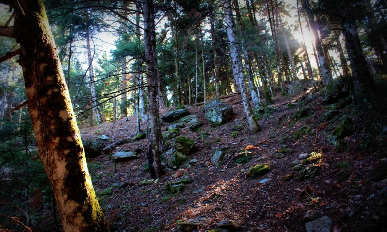 Απαγόρευση κυκλοφορίας στα δάση της Λακωνίας λόγω κινδύνου πυρκαγιάς