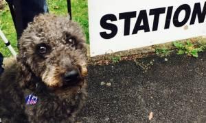 Τα...τρελά και απίθανα του δημοψηφίσματος στη Βρετανία