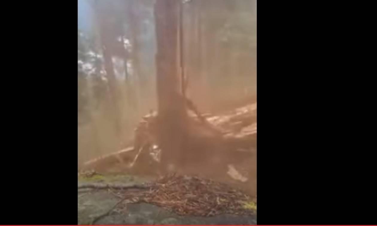 Αυτός ο άνδρας προσπάθησε να κόψει ένα τεράστιο δέντρο όταν ξαφνικά... (VIDEO)