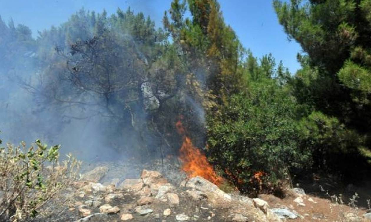 Υπό μερικό έλεγχο η πυρκαγιά στις Γούρνες Ηρακλείου